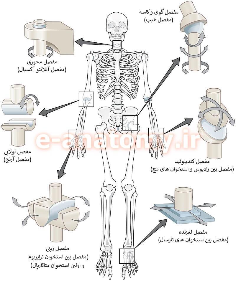 انواع مفصل سینوویال