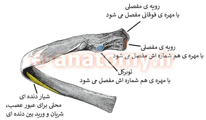 ساختار یک دنده ی تیپیک
