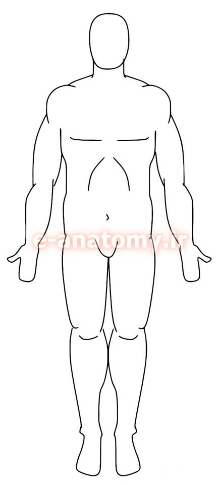پوزیشن آناتومیک