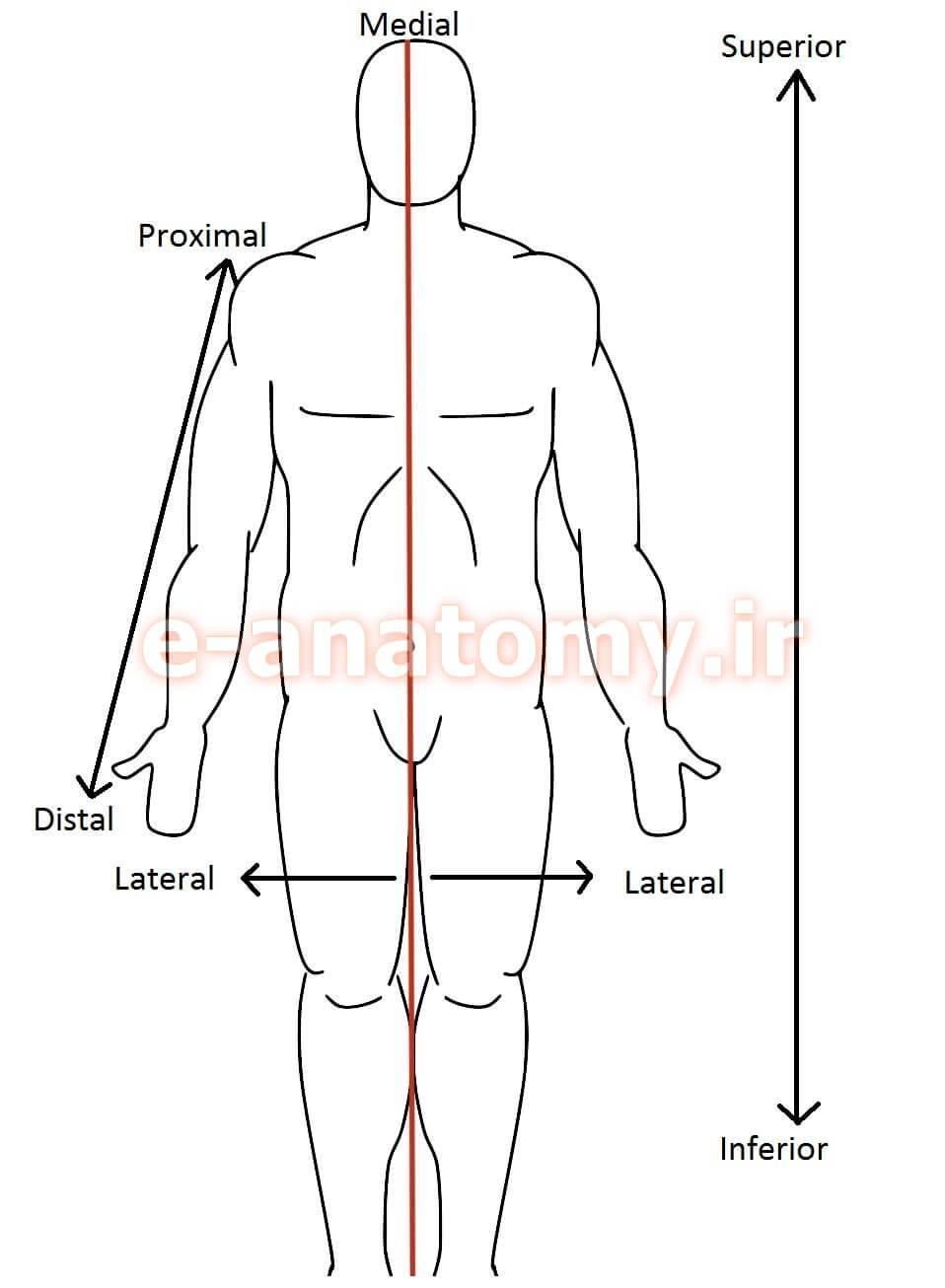 اصطلاحات مکانی در آناتومی