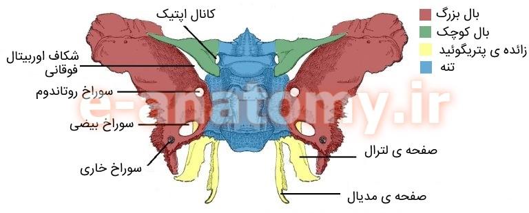 لندمارک های استخوانی اسفنوئید