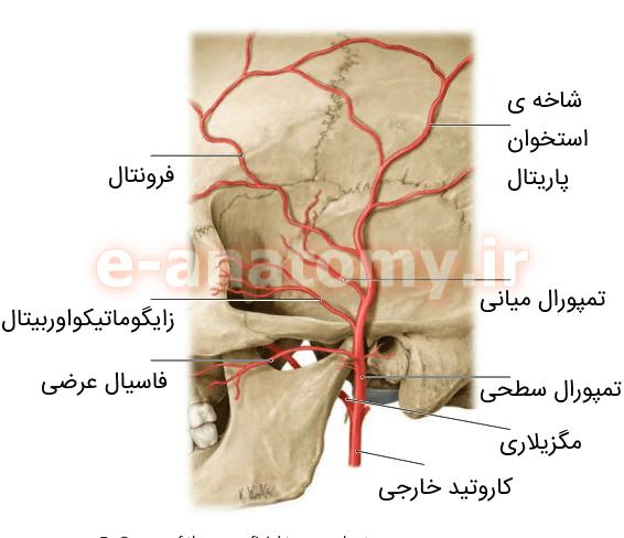 شریان تمپورال سطحی