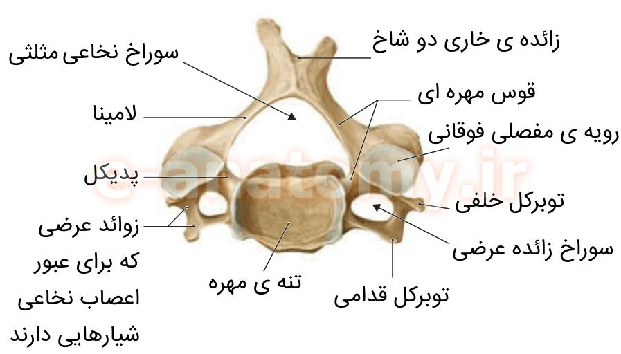 مهره ی گردنی