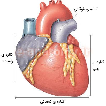کناره های قلب