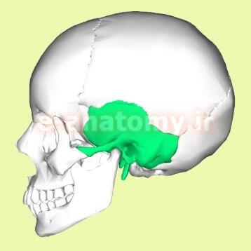 استخوان تمپورال