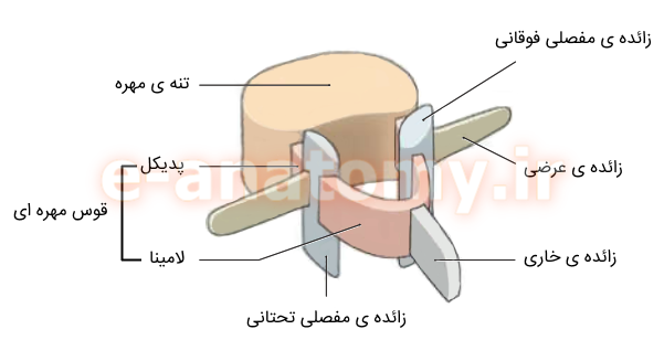 ساختار یک مهره ی تیپیک